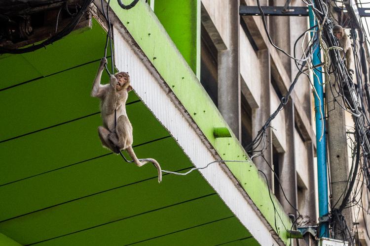 город обезьян