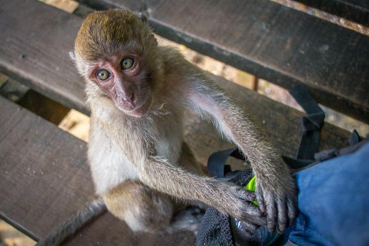 обезьяны в ао-нанге