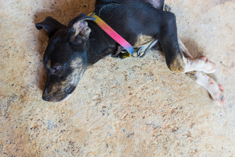 Пёс, Индия