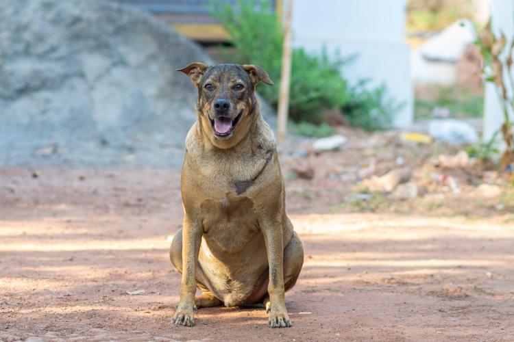 Собака в Гоа, Анджуна