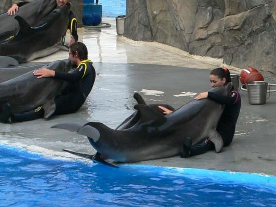 Батумский дельфинарий