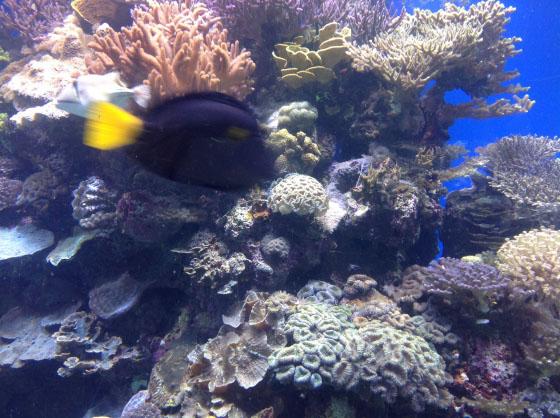 В подводной обсерватории