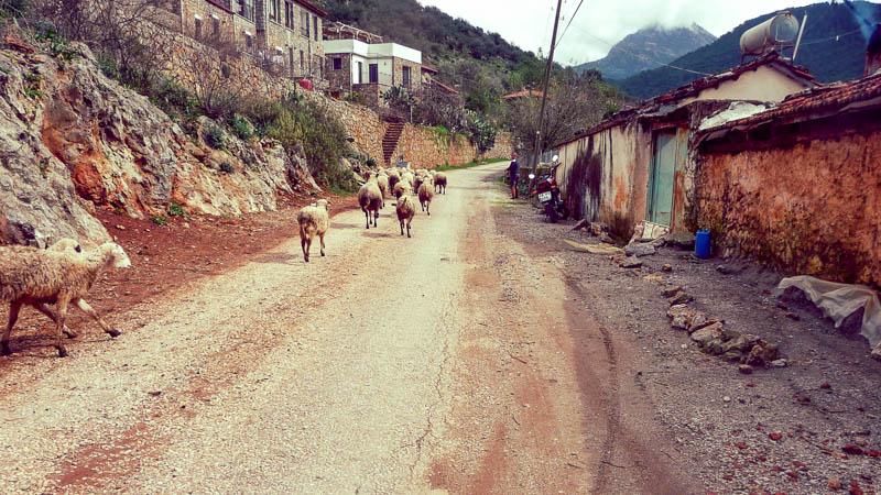 Отдых дикарём в Турции